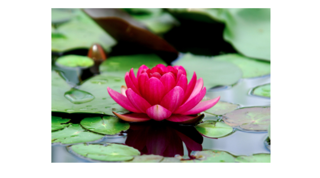 The Nature of Insight: The Lotus Puzzle, a Zen Koan Exercise